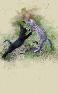 The feral cats
